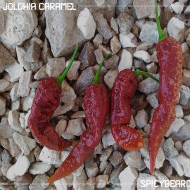 Bhut Jolokia Caramel - Capsicum Chinense