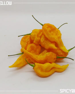 Peperoncino piccante Fatalii Yellow - Capsicum Chinense