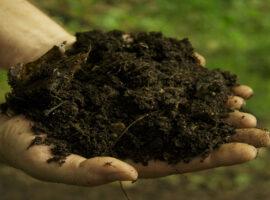 I migliori fertilizzanti biologici per i peperoncini piccanti