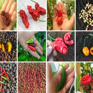 Collezione semi peperoncini piccanti - selezione mista - 120 semi