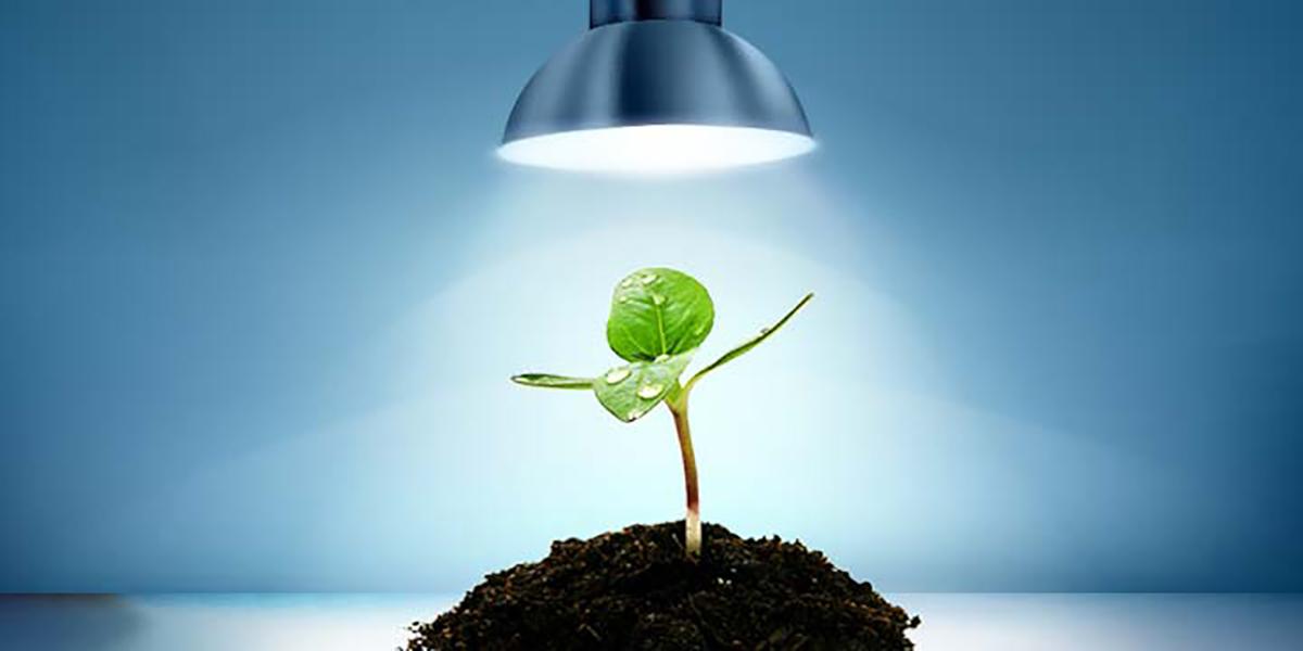 Lampade Per Piante Da Appartamento.Scegliere Le Giuste Lampade E Calcolare La Quantita Di Luce Per La