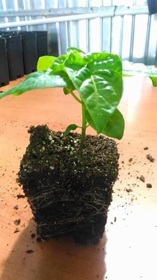 Come preparare il terriccio e rinvasare le piante