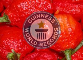 Carolina Reaper - Guinness World Records - peperoncino più piccante del mondo