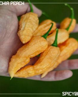 Peperoncino piccante Bhut Jolokia Peach - Capsicum Chinense