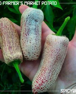 Peperoncino Piccante Jalapeno Farmer's Market Potato - Capsicum Annuum