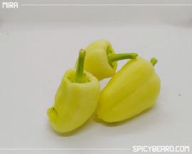 Peperone dolce Mira della Polonia - Capsicum Annuum