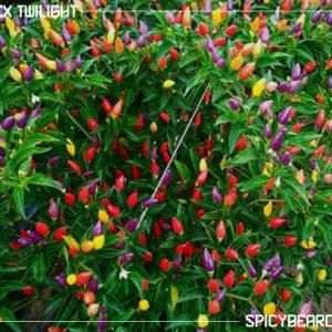 Peperoncino Numex Twilight - Capsicum Annuum