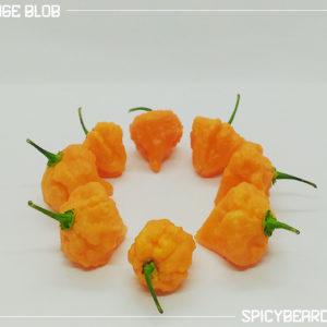 Peperoncino piccante Orange Blob - Capsicum Chinense