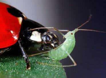 lotta-biologica
